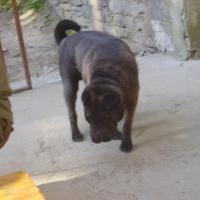 Pes :D