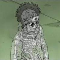 Shinovo telo